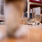 zwei_katzen